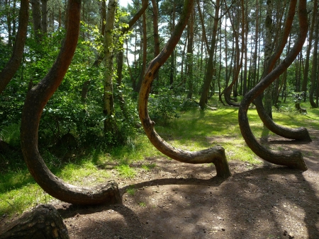 Hoia Baciu: Braving the world's most haunted forest