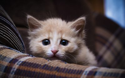 Five Cat Myths That Need To Die